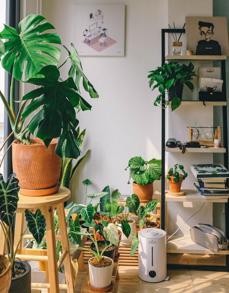 indoor plants aesthetic